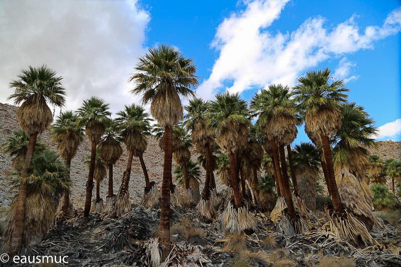 Mountain palm springs for Plush pad palm springs